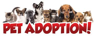 Image result for pet adoptions