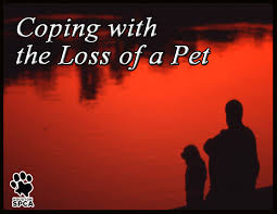Image result for pet loss support
