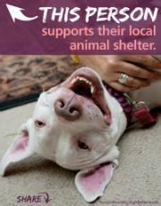 Image result for national animal shelter appreciation week