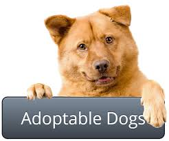Image result for humane society adoption