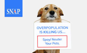 Image result for snap low cost spay neuter