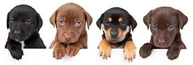 Image result for puppy classes
