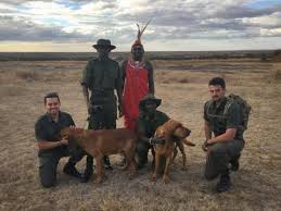 Image result for Dog Walk For A Cause - K9 Anti-Poaching Unit Fundraiser