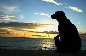 Image result for pet loss support groups