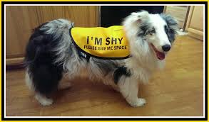 Image result for shy dog classes