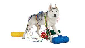 Image result for adult dog classes